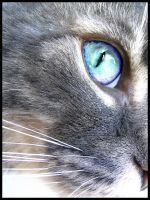 Cat's Eye by lims