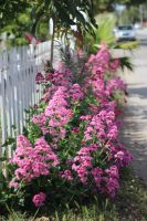 Beside the Picket Fence by AtomicBrownie