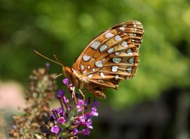 On Amber Wings by juliekswenson