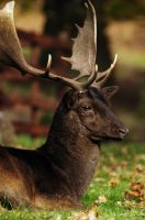 Proud Stag by waggysue
