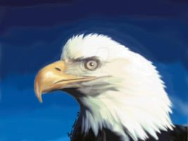 bald eagle by assassin-10