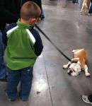 SKC Dog Show 2007: V by whitelouis