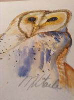 Owl- watercolour by mandykip