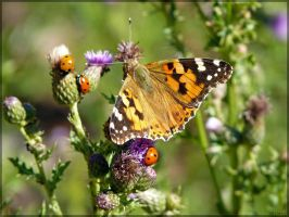 Painted Lady with Ladybugs by J-Y-M