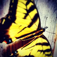 Dressed in Yellow by passion-art-F107