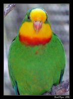 Colourful Parrot by DarthIndy