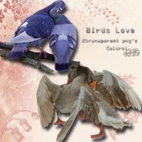 Birds love by libidules