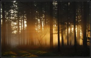 Lightthought 538 by lightthinker