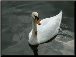 The Leafy Swan by littlefishey