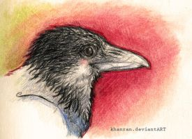 crows shouldn't wander off by Khanran