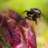 Tiny Black Jumper by Enkased