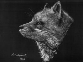 Red fox study by Lara-Shychoski
