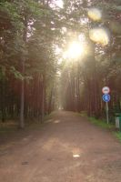 Forest road 2 by Panopticon-Stock