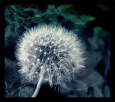 dandelion magic by LinaBrash