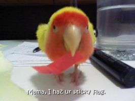 Mama, I haz ur sticky flag by JRigh
