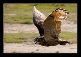 Great Horned Owl I by L3NN4RT