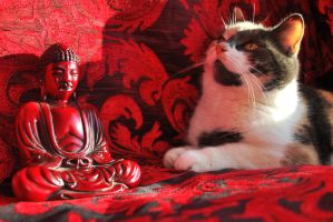 buddha by witchy-poo