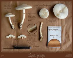 Know Your Mushrooms by cambium