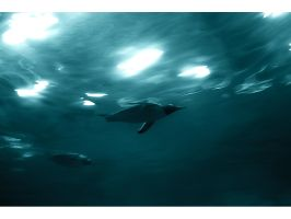 Diving with the penguins by gregorland