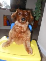 Dog in a Booster Seat by willow1894