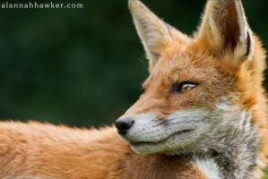 Scamp 04 by Alannah-Hawker