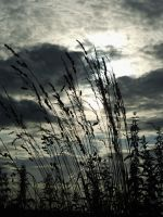 Shadows by EricaOscura