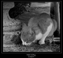here kitty by lucaport