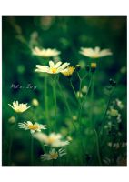 Garden of Daisies. by Mrs-Ivy