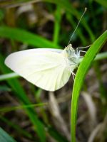 Butterfly 2 by Youcef07