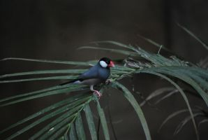 java sparrow 1.3 by meihua-stock