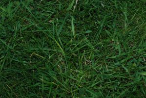 Grass by Quinnphotostock