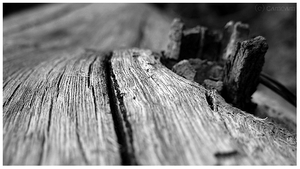 - Wood - by Cam-lou-photos