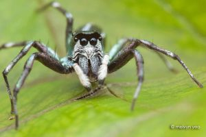 Jumper with eyebrow! by melvynyeo