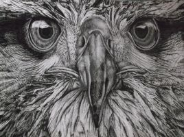 GCSE Art eagle in fineliner by Its-real-to-us