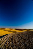 Fields of Gold by biroo87