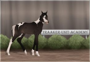 Traaker Import 77 | CUSTOM TRADE by BRls-love-is-MY-Live