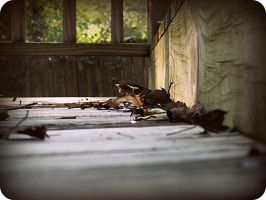 when the leaves fall by x--photographygirl