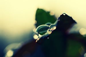 A Rain Drop by Sunira