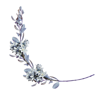 hyacinths with a laurel branch png by Amalus