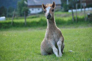 Foal by Alvanthe