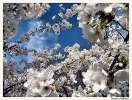 Blooming world by Luiza82