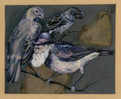 darwin and his finches by Cephalopodwaltz