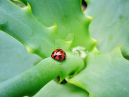 lil lady bug on the aloe plant by MidnightsBloom