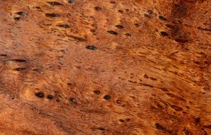 Mesquite Texture_Spots by lamorth-the-seeker