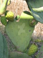 Cactus In Love by Maltese-Naturalist