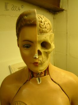 Anatomy head 1 by neb8stock