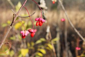 Red Berries of Death by MoonShadowPhoto