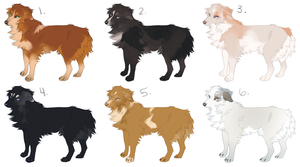 Australian Shepherd Adoptables (CLOSED) by tuliplou