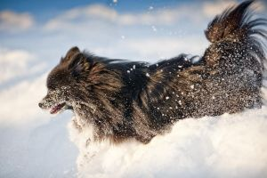 Snow dog by Kapaska