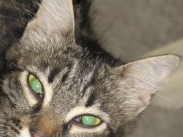cat with green eyes by dedecry
